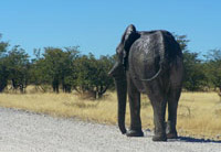 Tours & Transfers Windhoek
